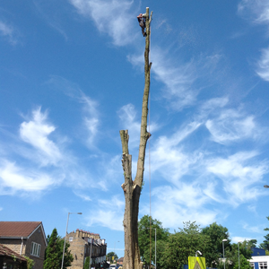 Tree Felling, Bradford, West Yorkshire