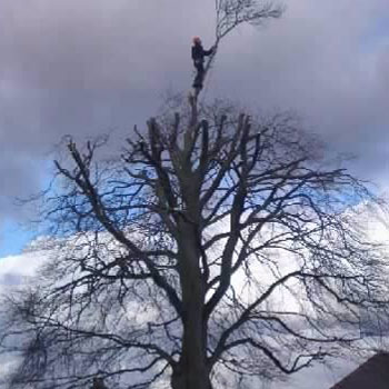 Tree Surgeon, Bradford, West Yorkshire