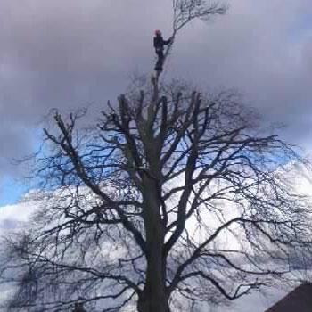 Tree Surgeon, Bradford, West Yorkshire